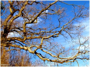 Branches d'arbre dans le ciel bleu