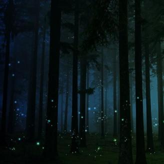 imagery-of-a-dream-firefly-forest-flickr-wookmark-194874