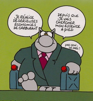 lareleve-chat-essence-a-pied