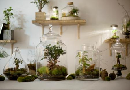DIY-notre-mode-d-emploi-du-terrarium
