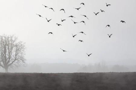paysage-humeur-novembre-le-brouillard-banque_121-66267